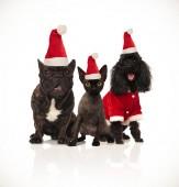 Weihnachtsgruppe von drei Santa Katzen und Hunde sitzen auf weißem Hintergrund und panting