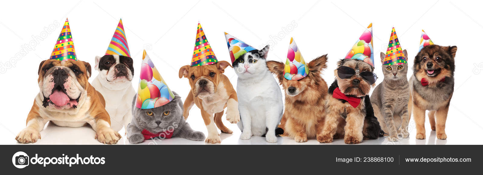 Adorable Cats And Dogs Wearing Colorful Birthday Hats Looking Funny While Standing Sitting Lying On White Background Stock Image