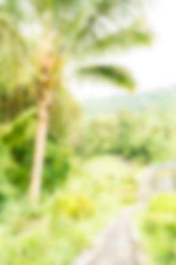 Bali Indonesia Travel theme blur background