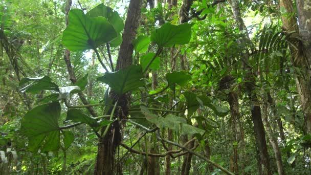 hluboký tropický les, kmeny stromů s větvemi a listy, video