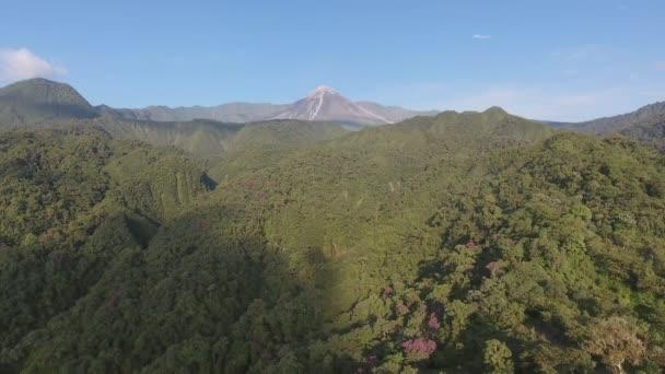 příroda video, zelené letní lesní stromy a hory vztek s modrou oblohou