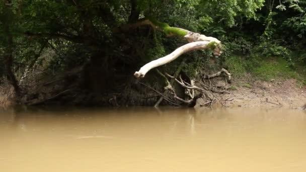 video lesních porostů a toku řeky, deštných pralesů v ekvádorské Amazonii