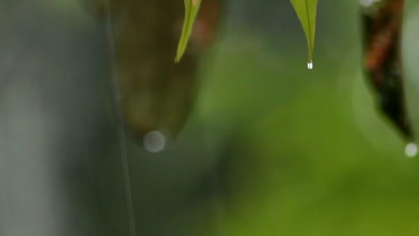 close up video tropických lesních stromů se zelenými listy, prší