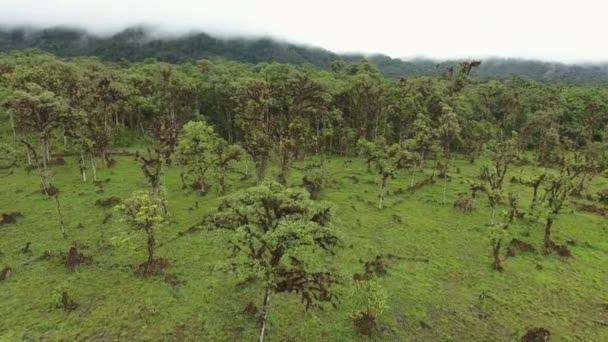 letecký pohled video lesních stromů