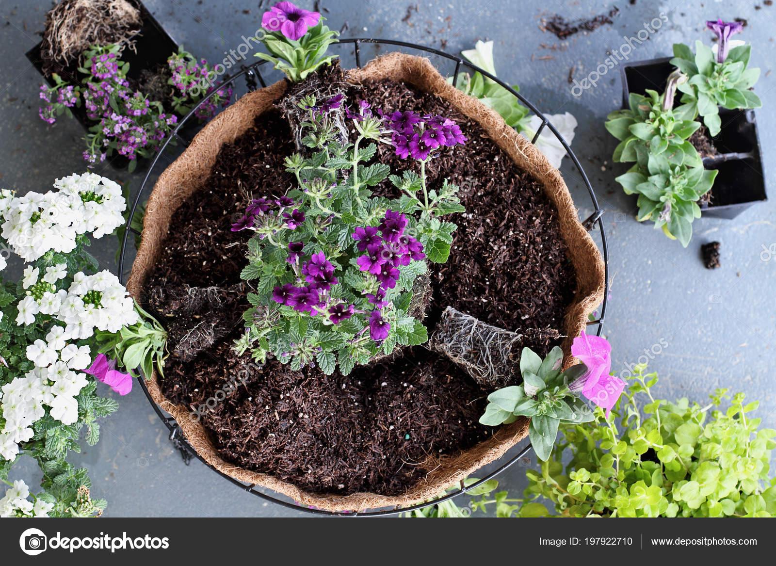 demonstration wie einen hängenden korb oder topf mit blumen pflanzen