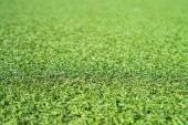 Fotografie Background of green artificial grass