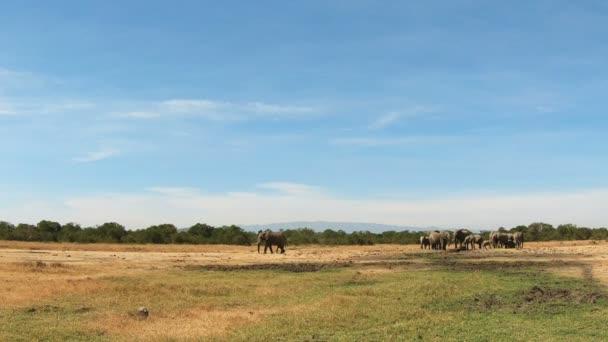 Divocí sloni v poli