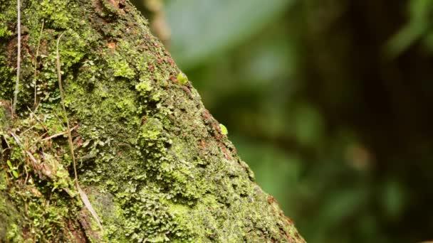 Fire ants on a tree