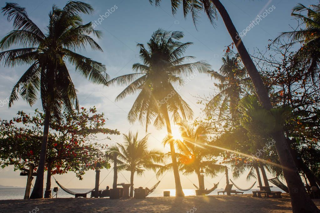 Hammocks between the Palm trees at sunset on the sea