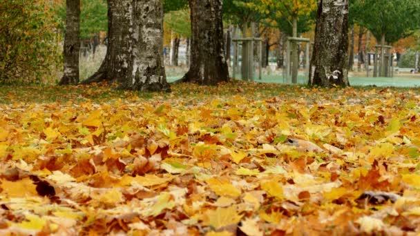 Színes juhar levelek alá a földre