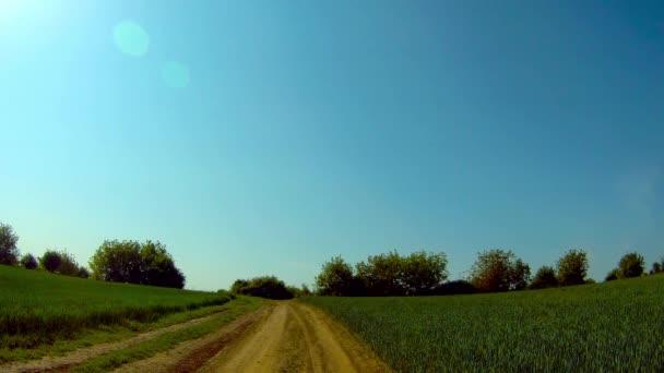 Weg durch Weizenfelder. Ein wilden Kaninchen entweicht.