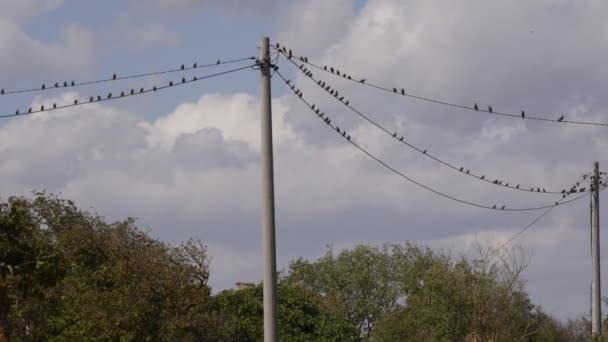 Vögel landeten auf einer Hochspannungsleitung.