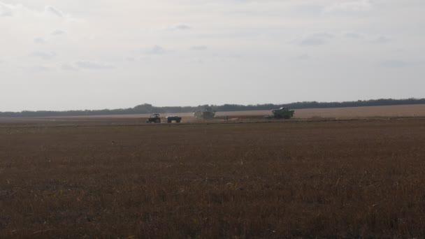 Kukoricatermesztés. Begyűjtő kukorica.