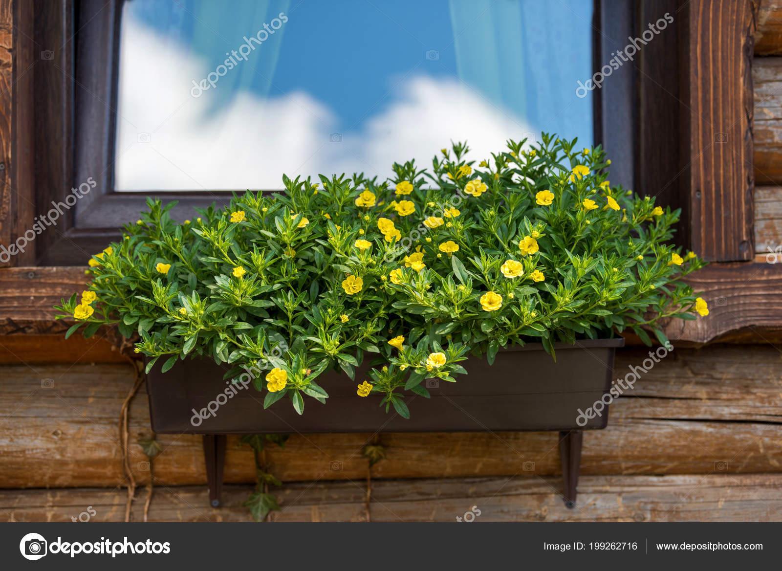 окна деревянные дома цветочные ящики стоковое фото