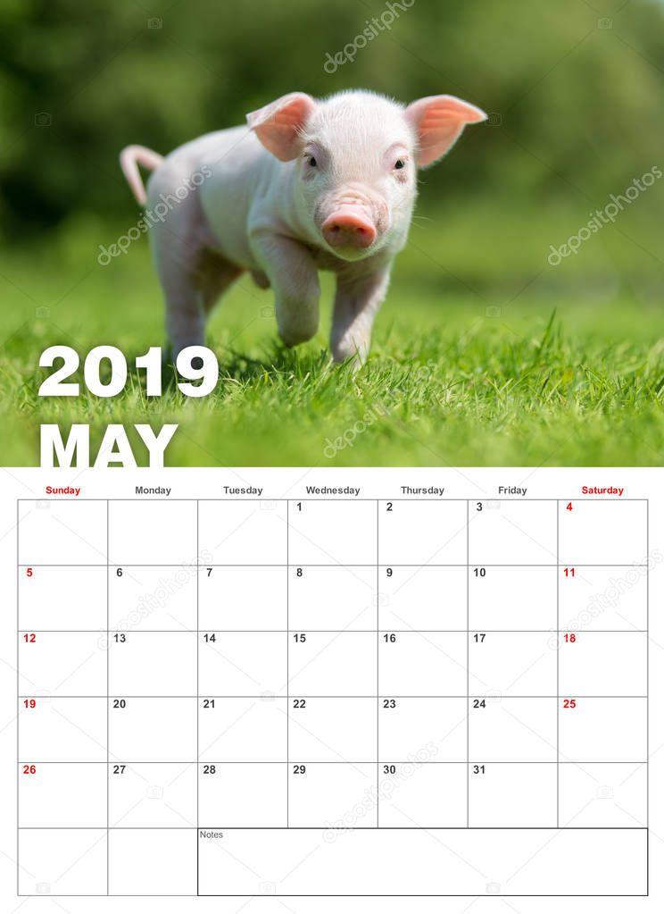 Baby funny piglet in grass. Calendar 2019 year