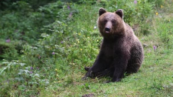Velký hnědý medvěd v divokém lese v létě