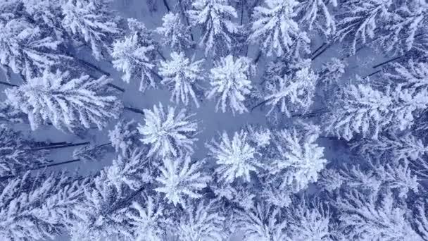 Kameraflug über Baumkronen von schneebedeckten Kiefern in schönen blauen Winterwald ohne Menschen Luftbildaufnahmen in 4k mit UHD-Kamera