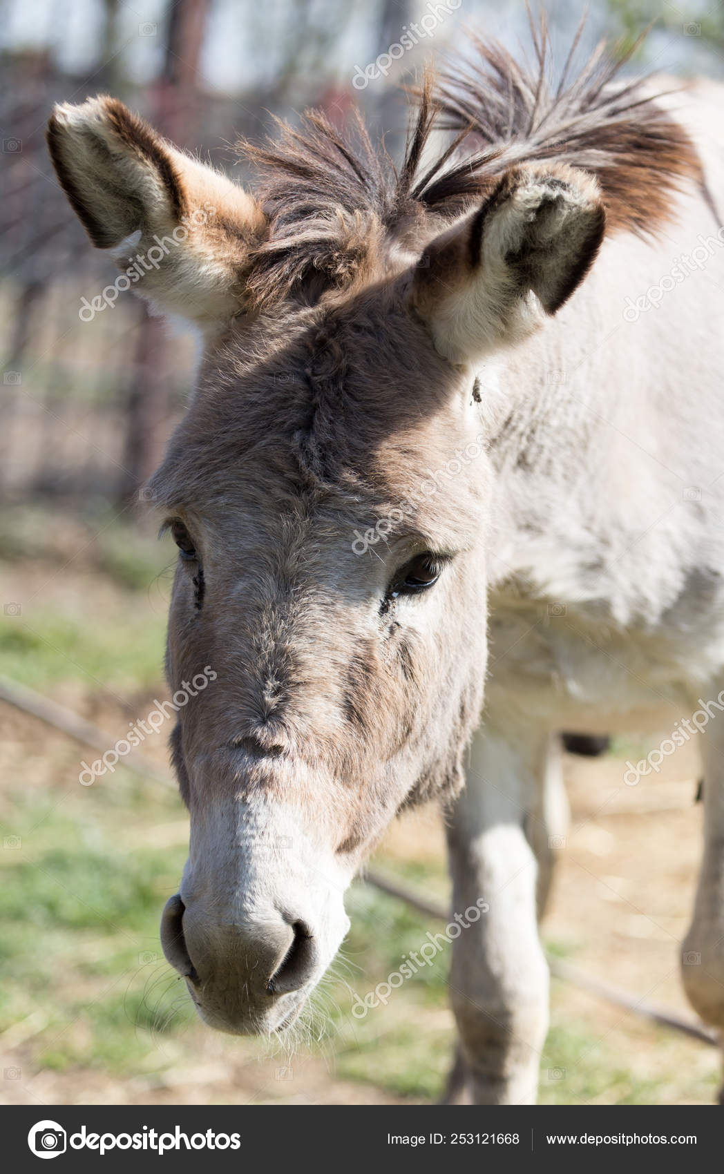 Áˆ Donkey Stock Pictures Royalty Free Donkey Head Pics Download On Depositphotos