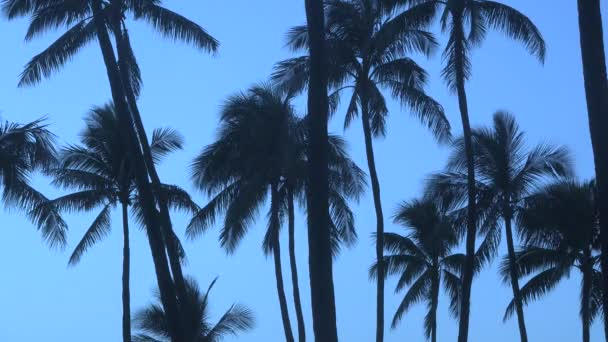 Vacation Background Footage Palm Tree Branches Moving In The Tropical Breez