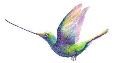 watercolor humming bird isolated on white. colibri colorful bird flying