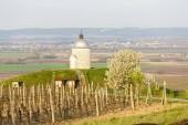kaple s vinicí poblíž Velké Bílovice, Česká republika
