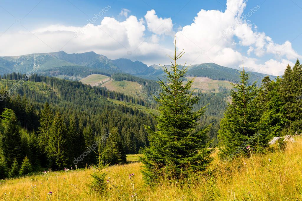 nice mountain landscape with meadow in low tatras, slovakia