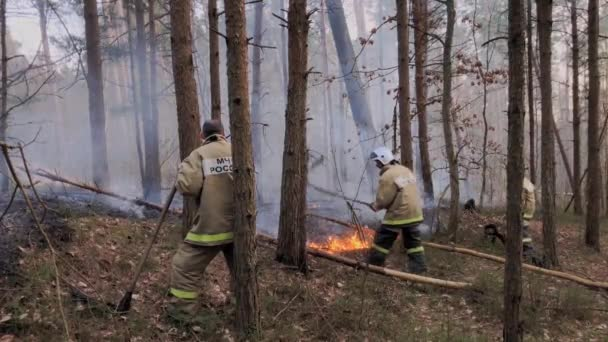 Firefighters extinguish the fire in the forest.
