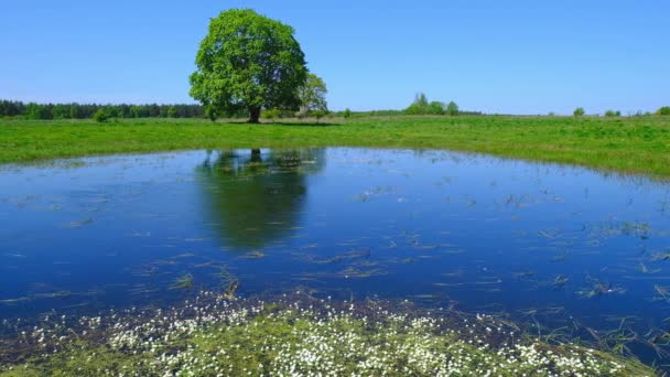 Peaceful summer landscape with green tree near the lake