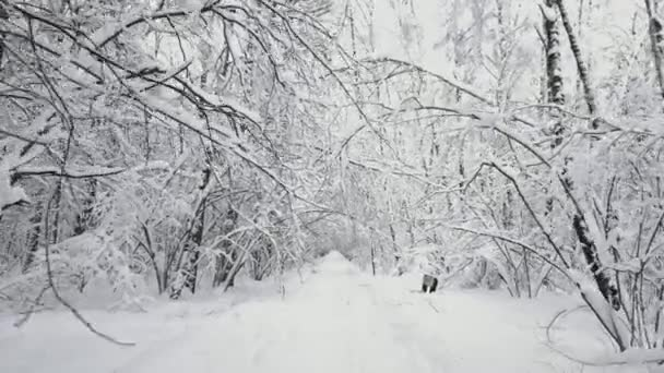 POV, procházky v lese cestou