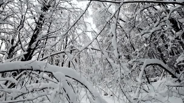 landscape in the forest after snowfall
