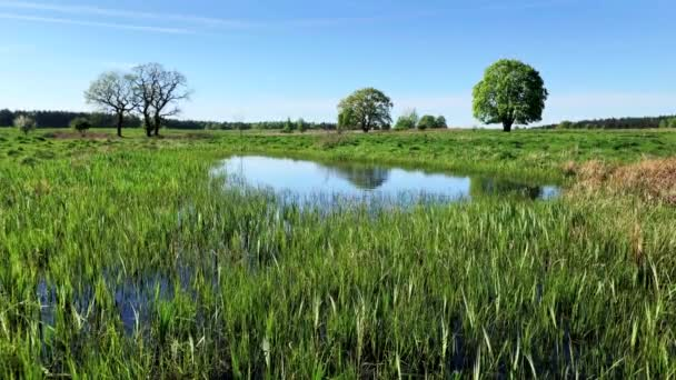Peaceful summer landscape with green tree near the pond