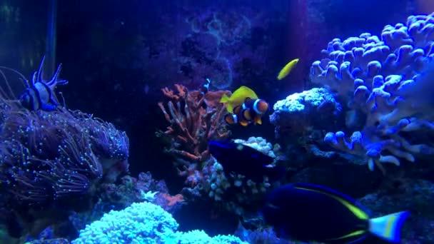 Tropical fish at the sea water aquarium