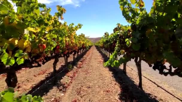 Krajinu vinic v Napa valley