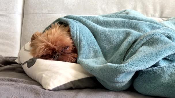 Herrchen streichelt und deckt schlafenden Hund mit Decke ab