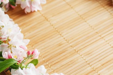 Frame of spring flowers of sakura on bamboo background. Beautiful cherry blossom sakura in springtime
