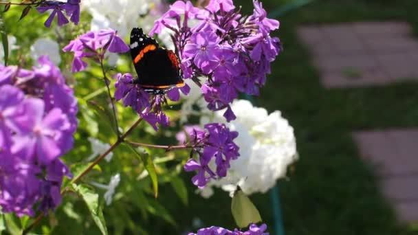 Motýl a moucha v zahradě. Pomalé movi pohybu bez zvuku.
