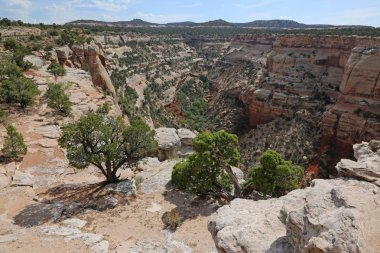A canyon in the Colorado National Monument, in Mesa County, near Grand Junction, Colorado.