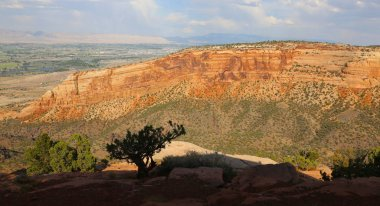 The silhouette of a pinion pine against the north end of wedding canyon with Grand Junction in the background, shot in the Colorado National Monument, found in Mesa County, Colorado.