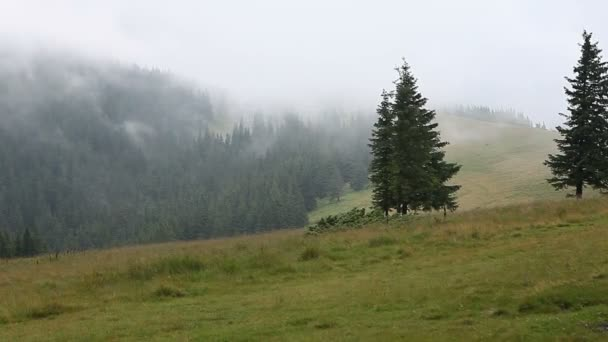 Hegyi rétek és európai fenyves erdő sűrű köd