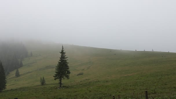 Dense fog over mountain meadow and European pine forest