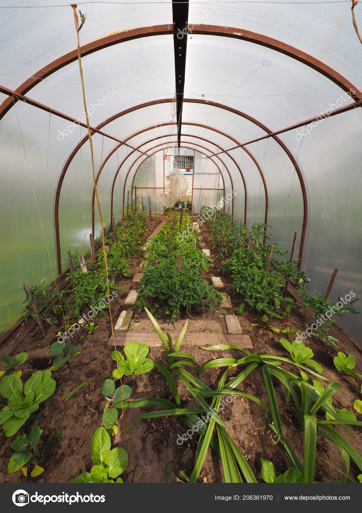 Enjoyable Greenhouse Vegetables Summer Stock Photo C Enskanto 206361970 Home Interior And Landscaping Dextoversignezvosmurscom
