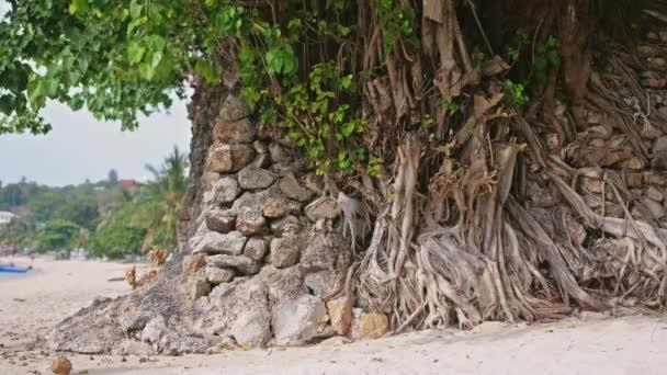 Osamělé stromy rostoucí v blízkosti pobřeží na tropické pláži. Zpomalený pohyb. 3840 x 2160