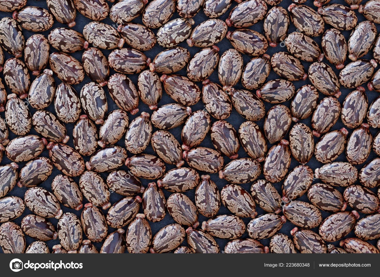Seeds Castor Bean Ricinus Communis Background Stock Photo C Bernhardlux 223680348