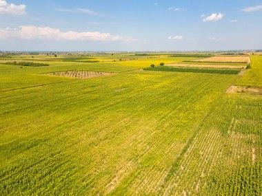 Aerial view of landscape sunflower field near city of Plovdiv, Bulgaria