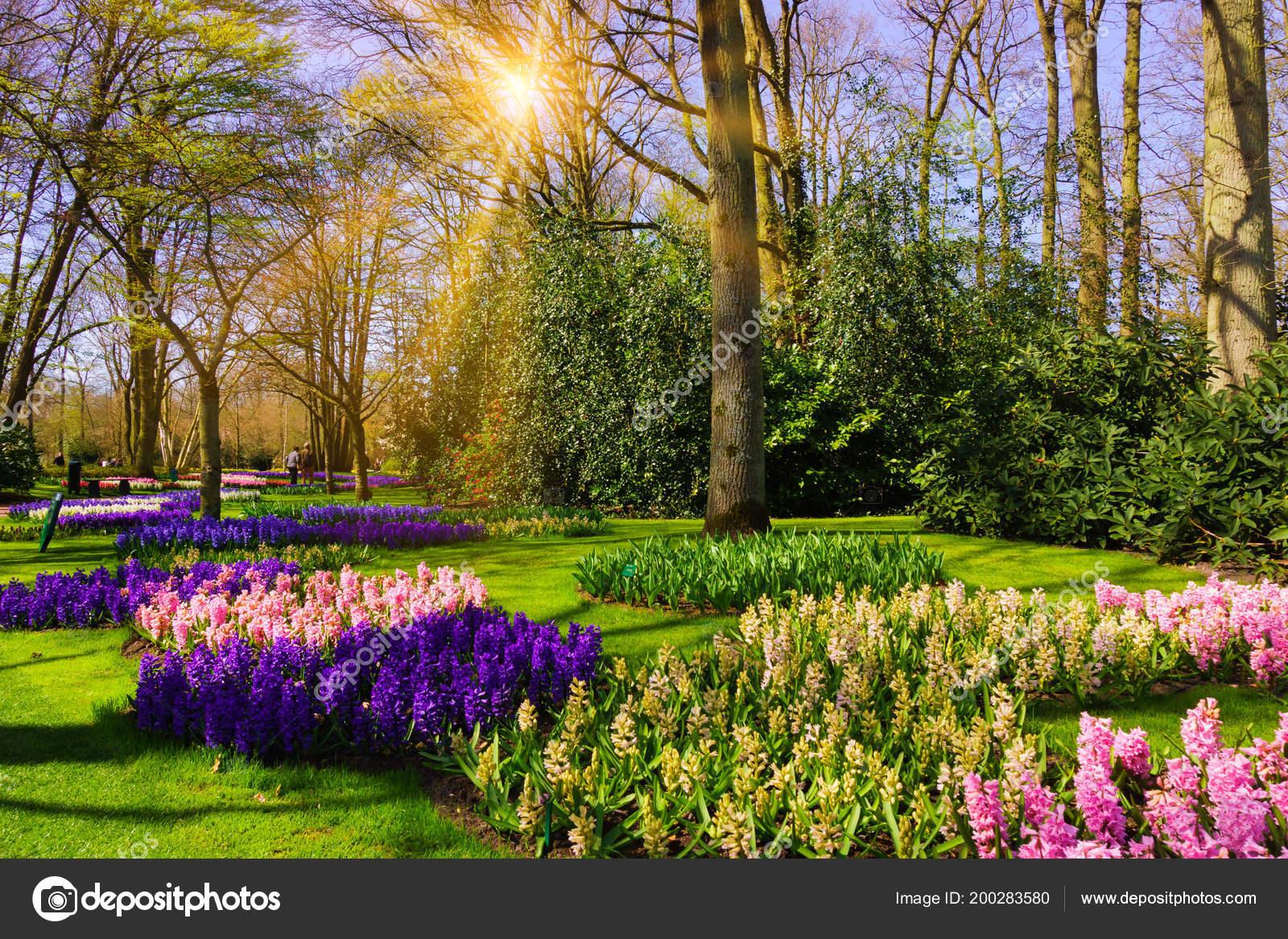 Imagenes De Paisajes De Primavera: Hermoso Jardín Parque Primavera Paisaje Primavera