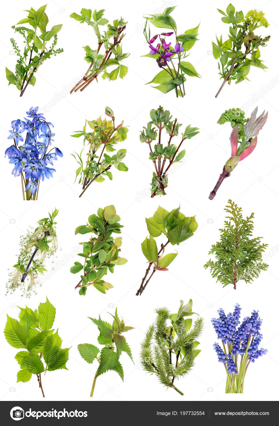 April Fruhling Europaischen Wildlebenden Pflanzen Und Blumen Gesetzt