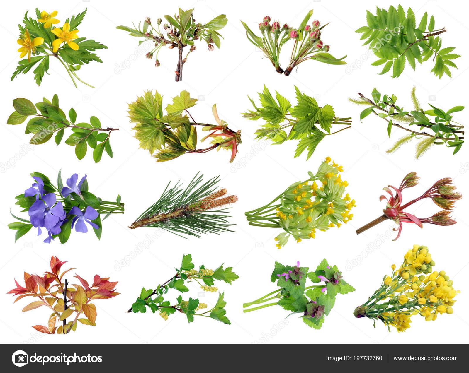 April Fruhlingszweige Europaische Wilde Baume Und Blumen Gesetzt