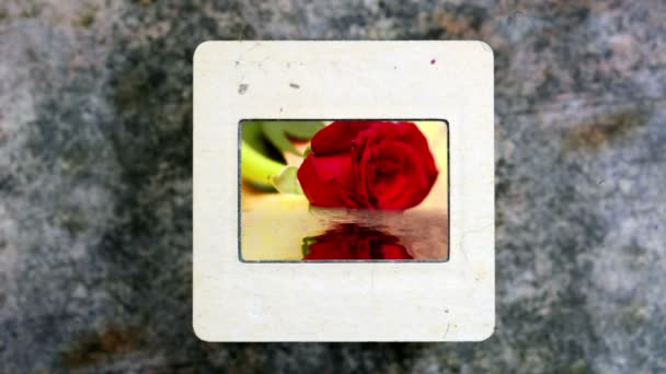 Red Rose tükrözi a a víz a vintage diafilm