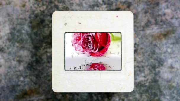 A víz tükrözi a vörös rózsa