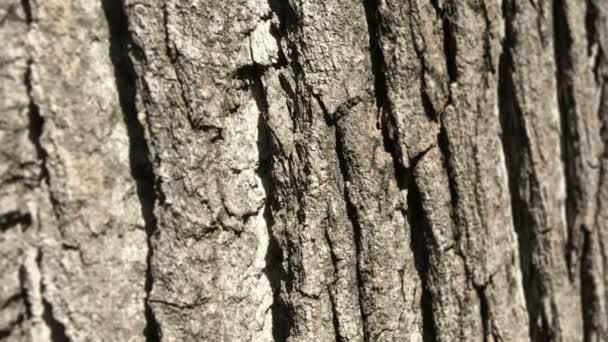 Hintergrundtextur der Baumrinde